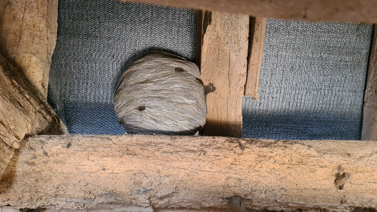 wasp nest removal in Caversham