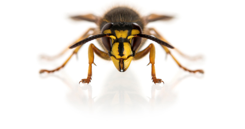 Commercial Wasp Control Reading