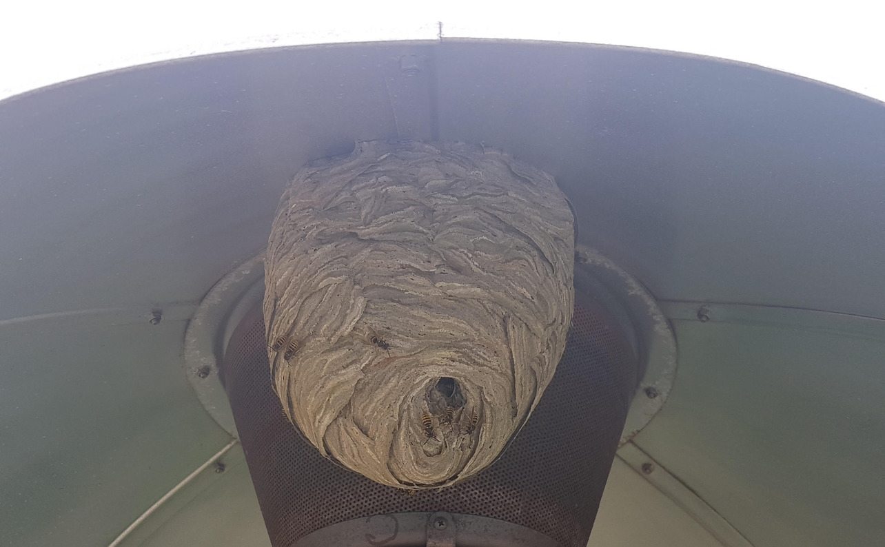 Wasp nest removal in Wokingham